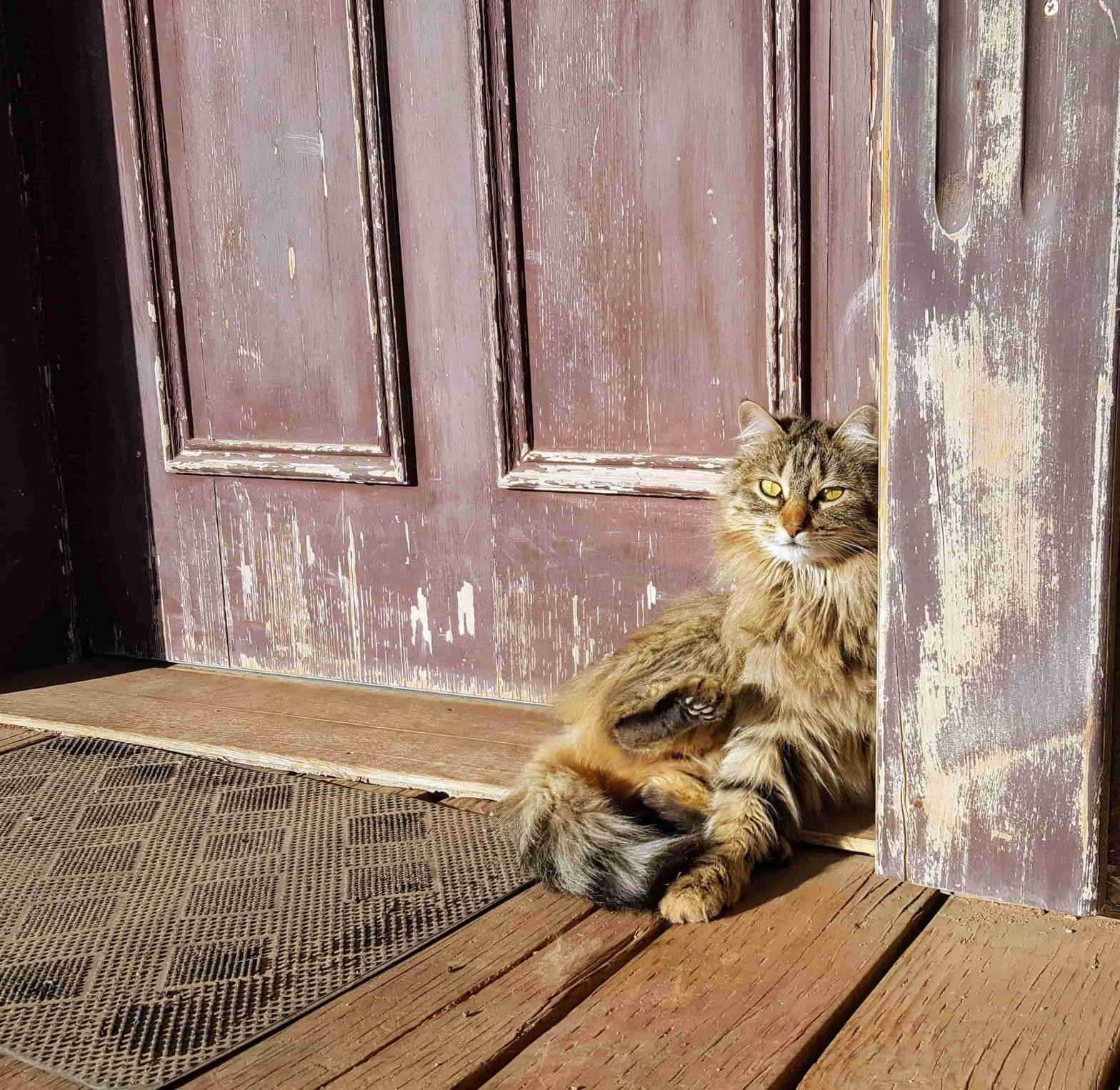 Een Staywell kattenluik voor vrijheid en veiligheid voor je huisdier